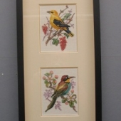 4-Birds-075