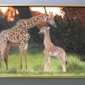 Beryls-Giraffe-1726