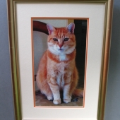 Ginger-cat1519